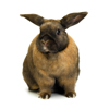 david cook cheltenham photographer rabbit